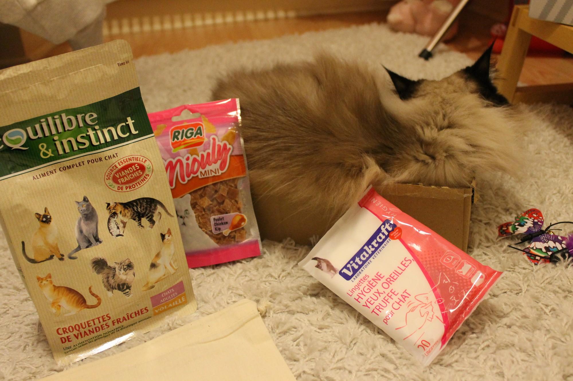 kittybox11