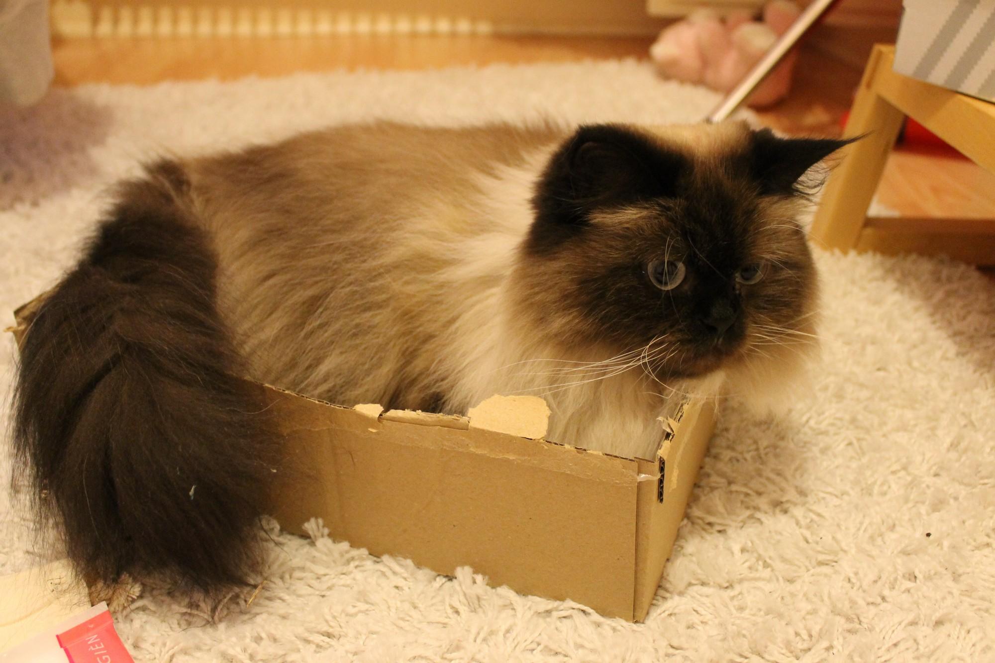 kittybox5