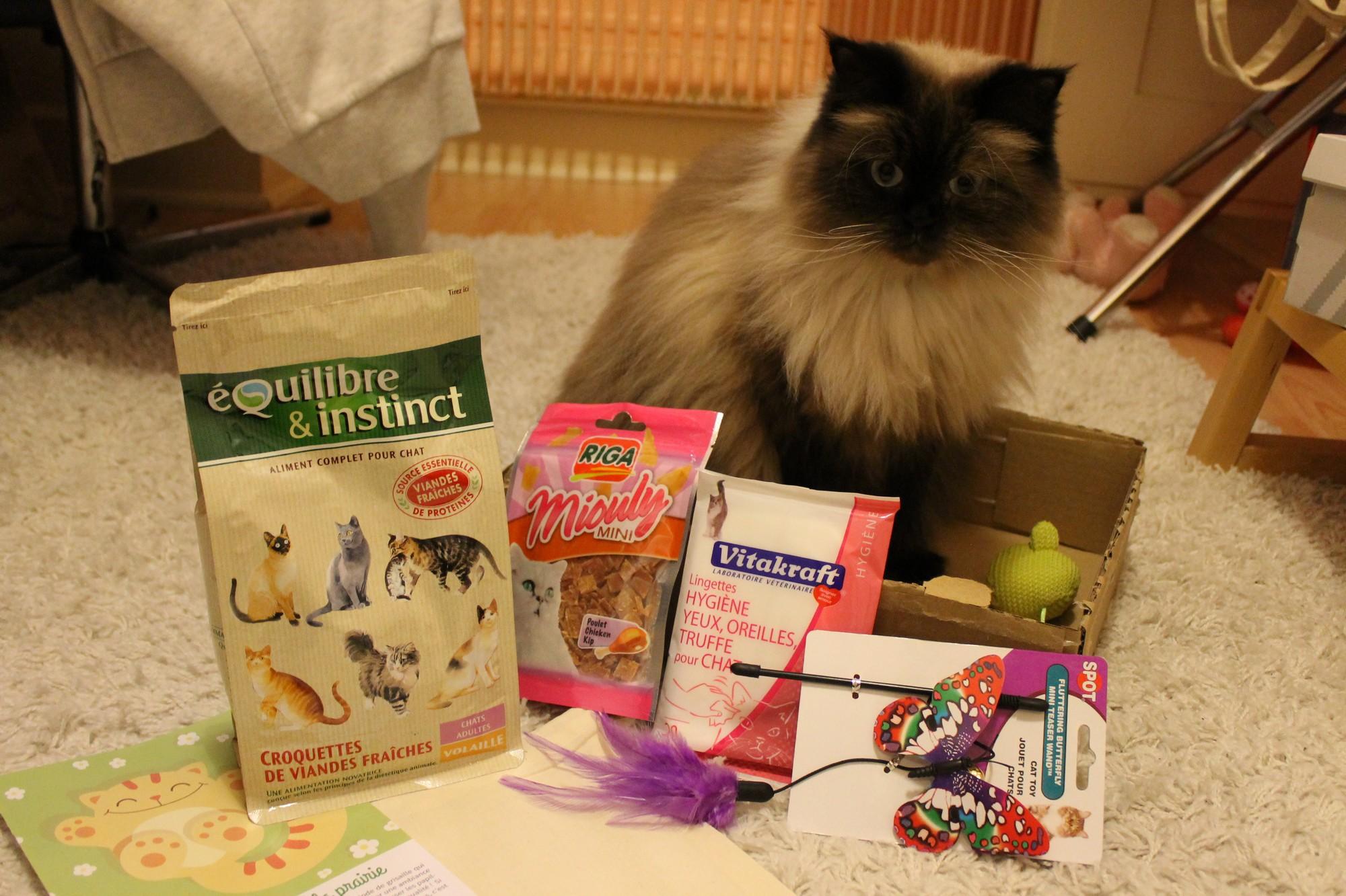 kittybox8