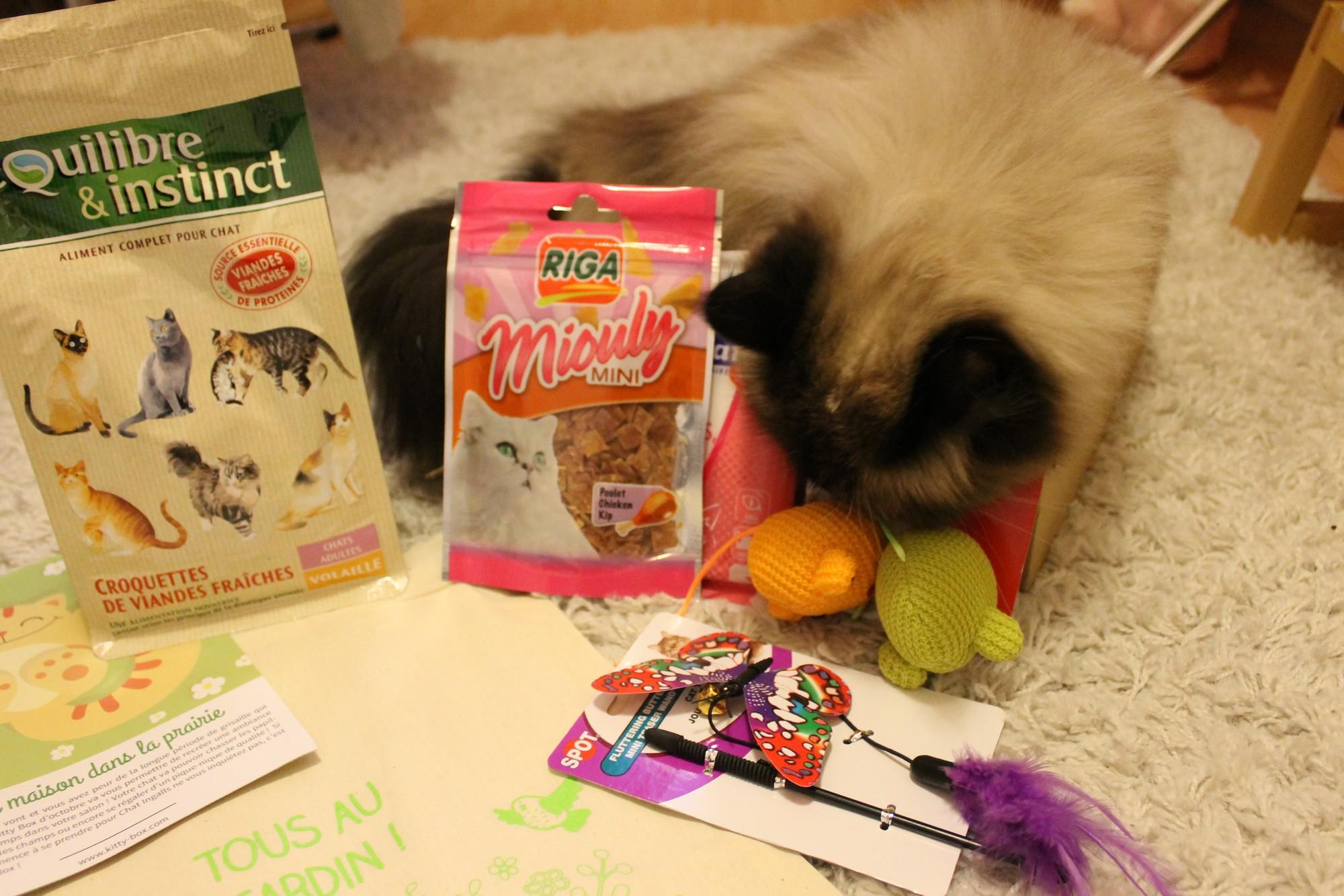 kittybox9