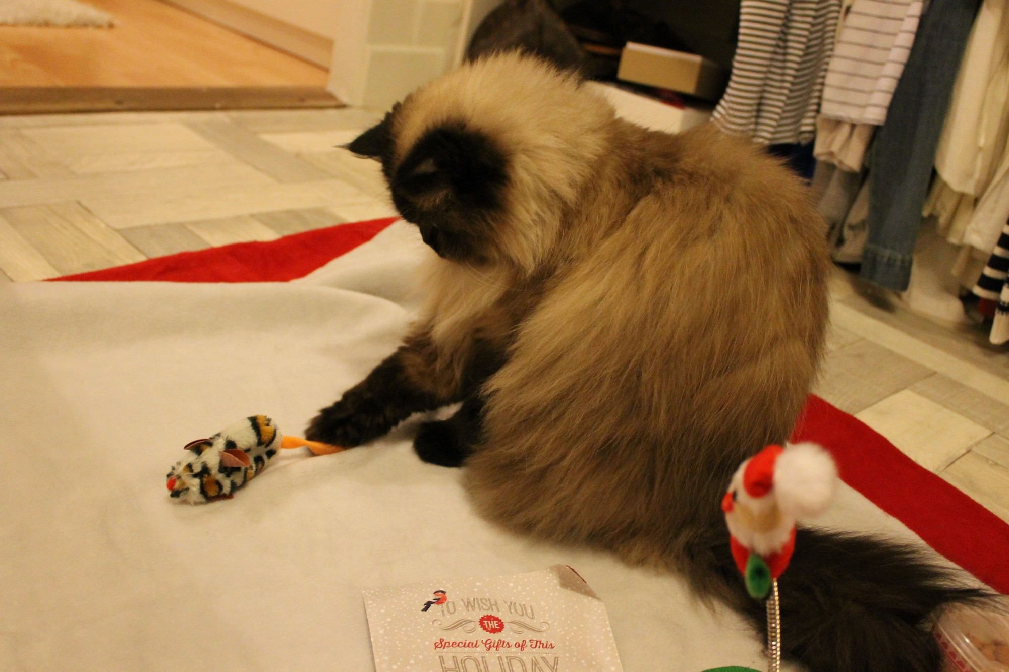 kittybox03