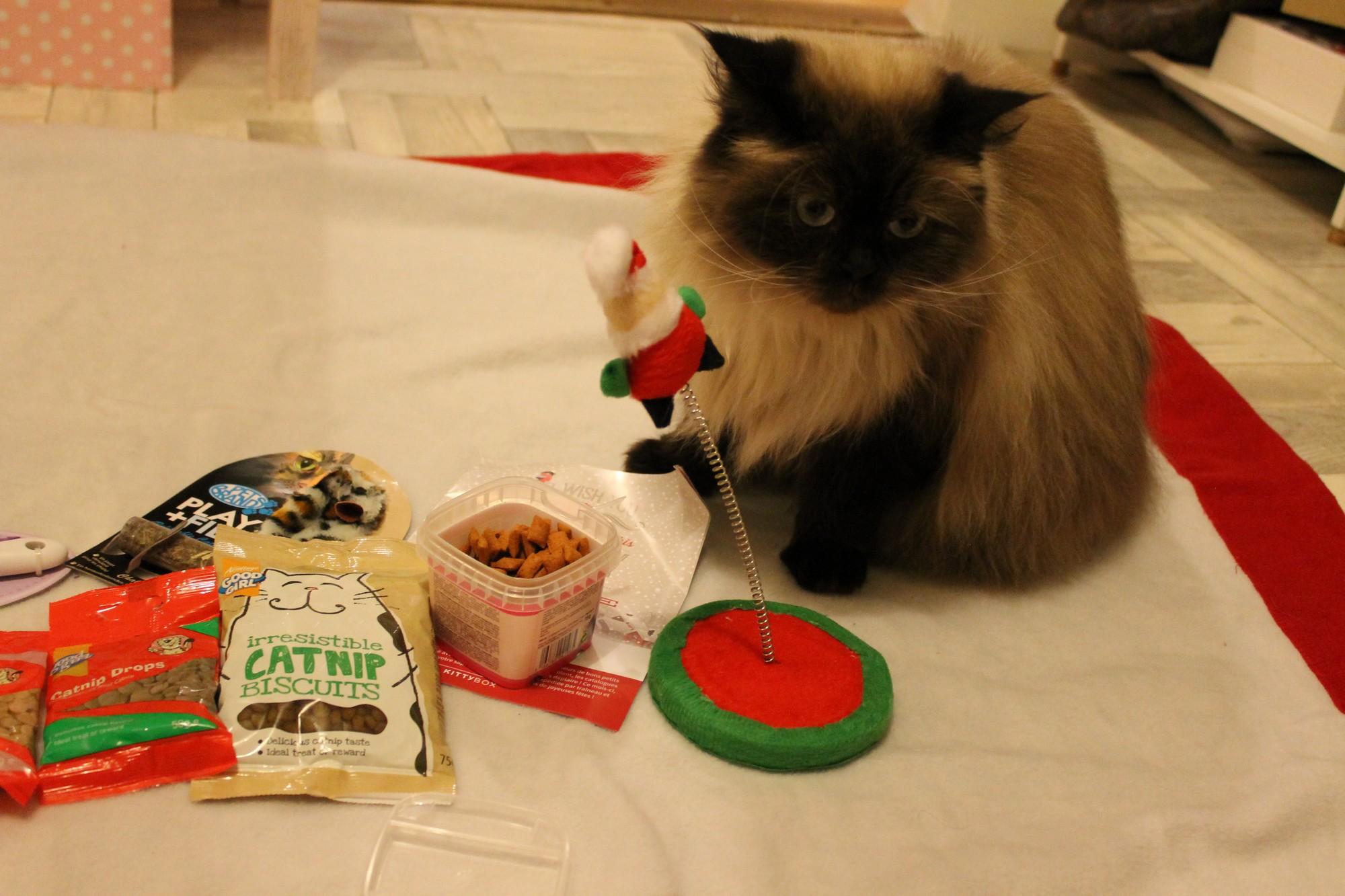 kittybox05
