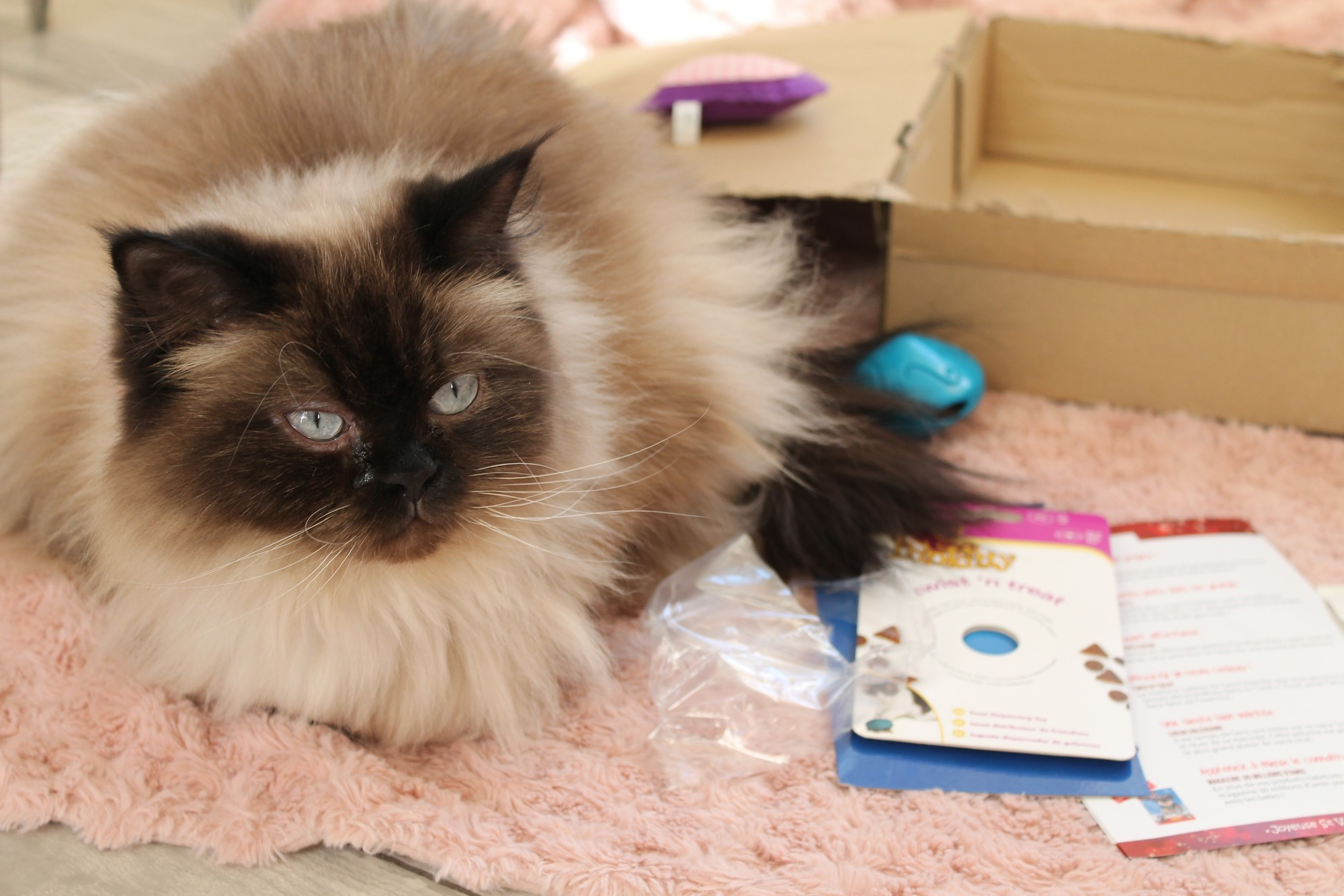 kittyboxfevrier1