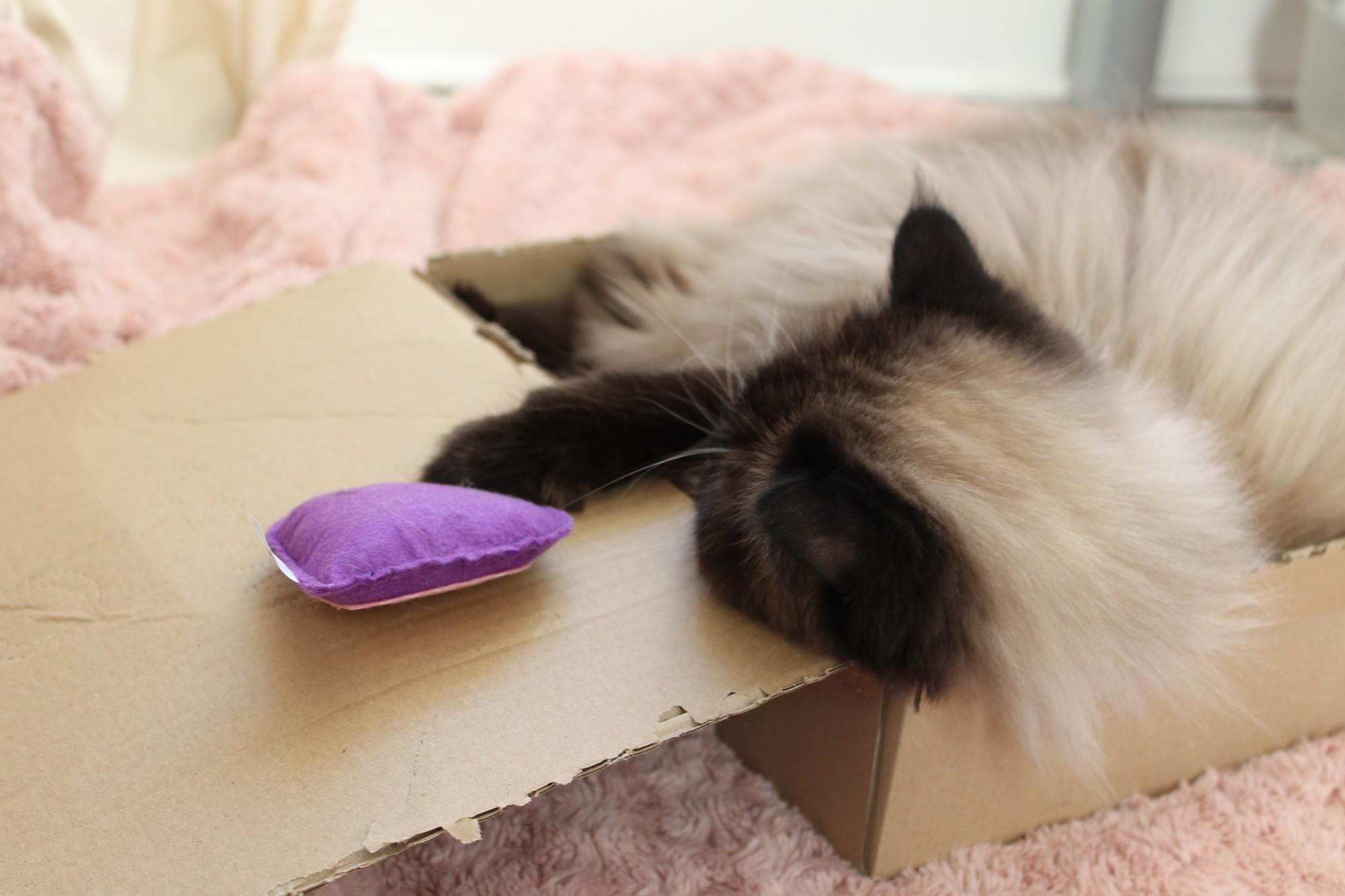 kittyboxfevrier2