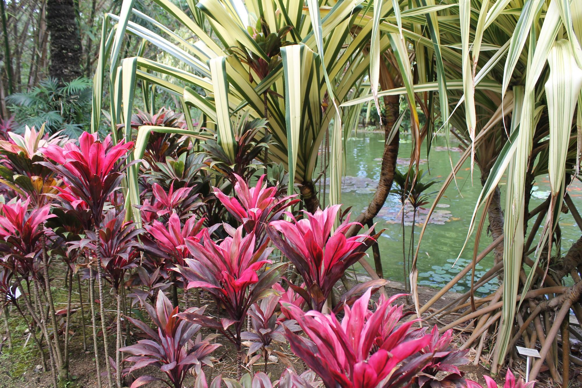 jardinbotanique1