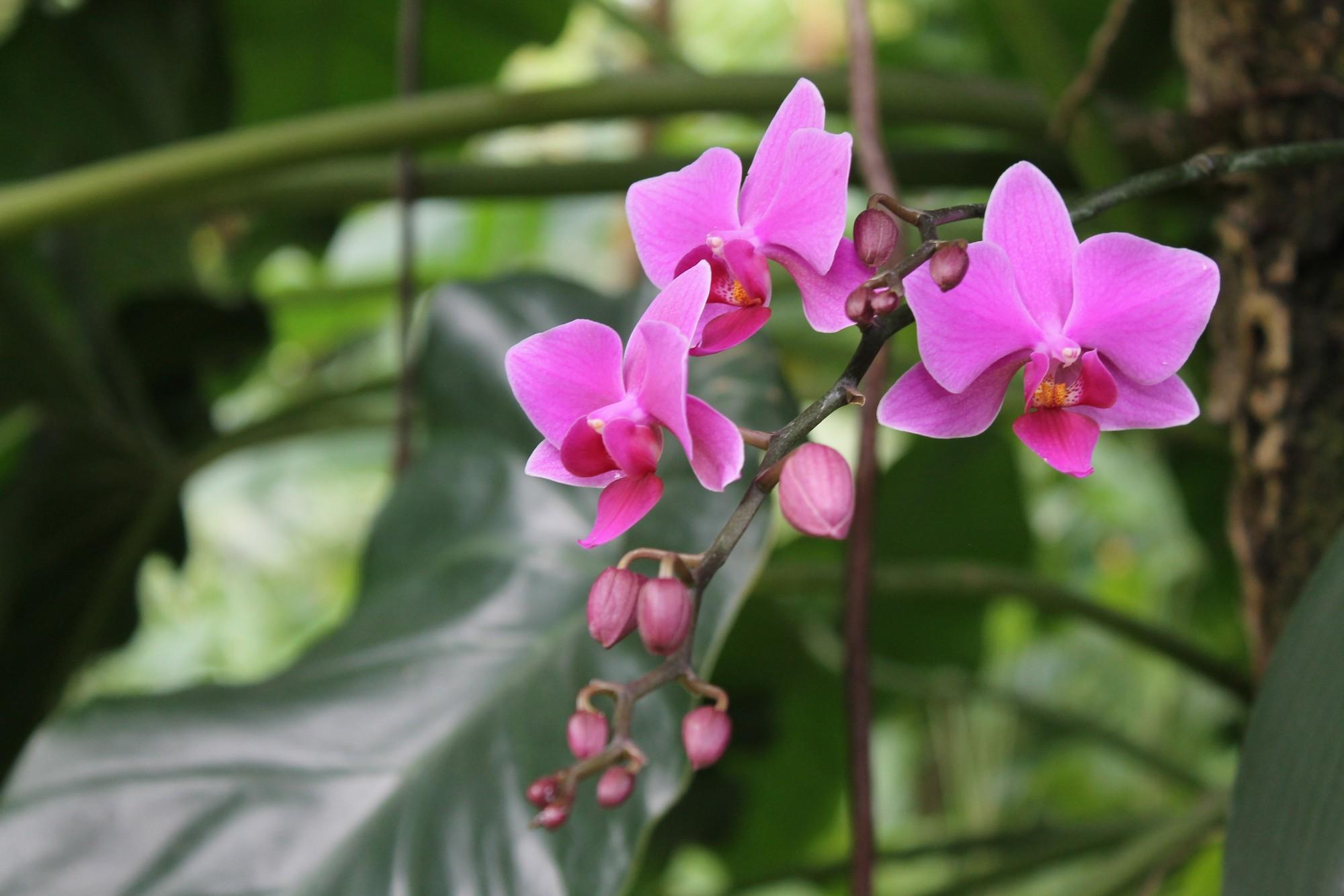jardinbotanique14