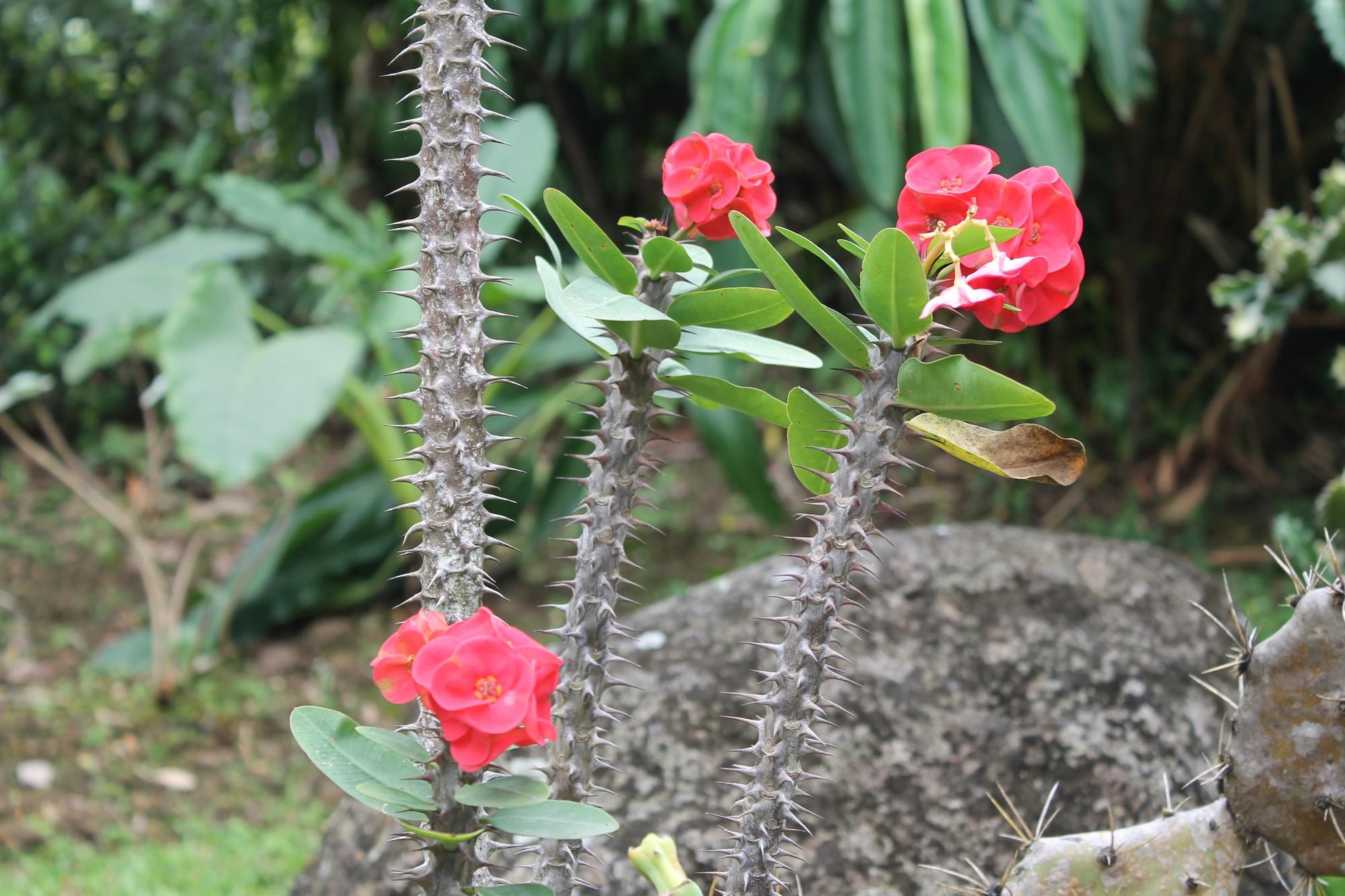 jardinbotanique16