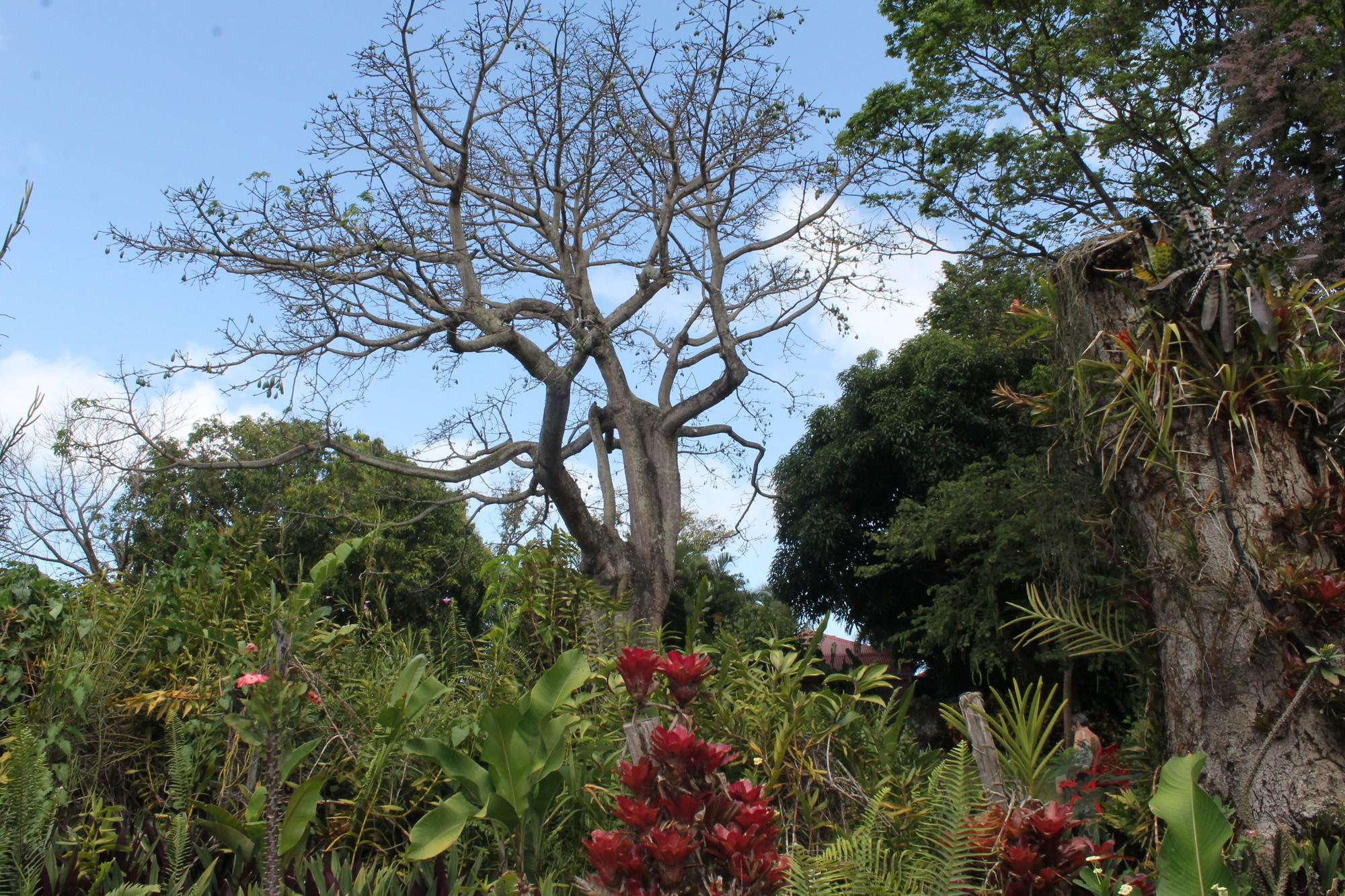 jardinbotanique2