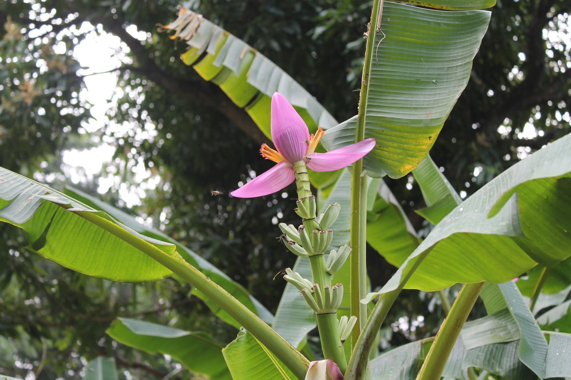jardinbotanique25