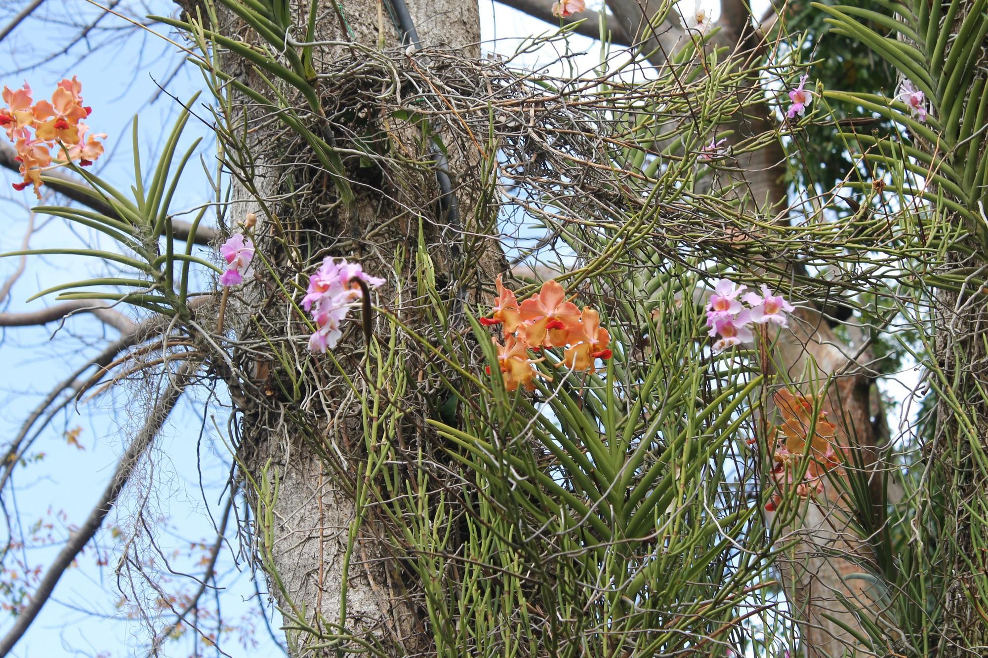 jardinbotanique6