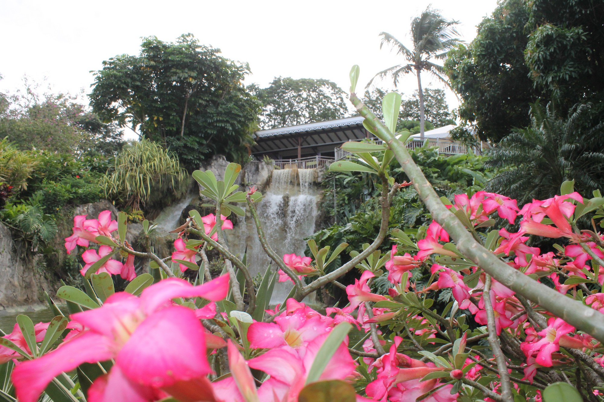 Initials cb le jardin botanique de deshaies initials cb for Jardin botanique rabais 2015
