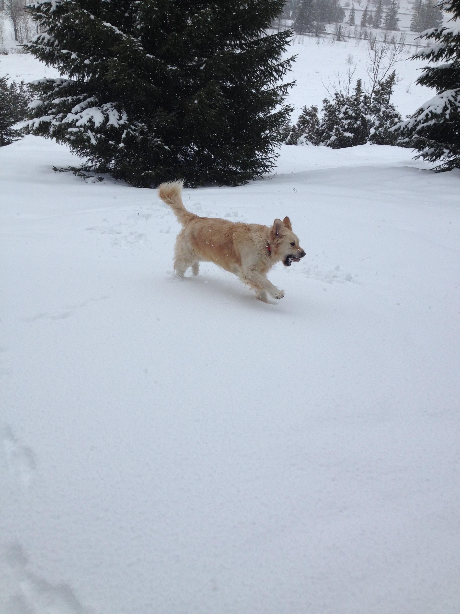 neige17