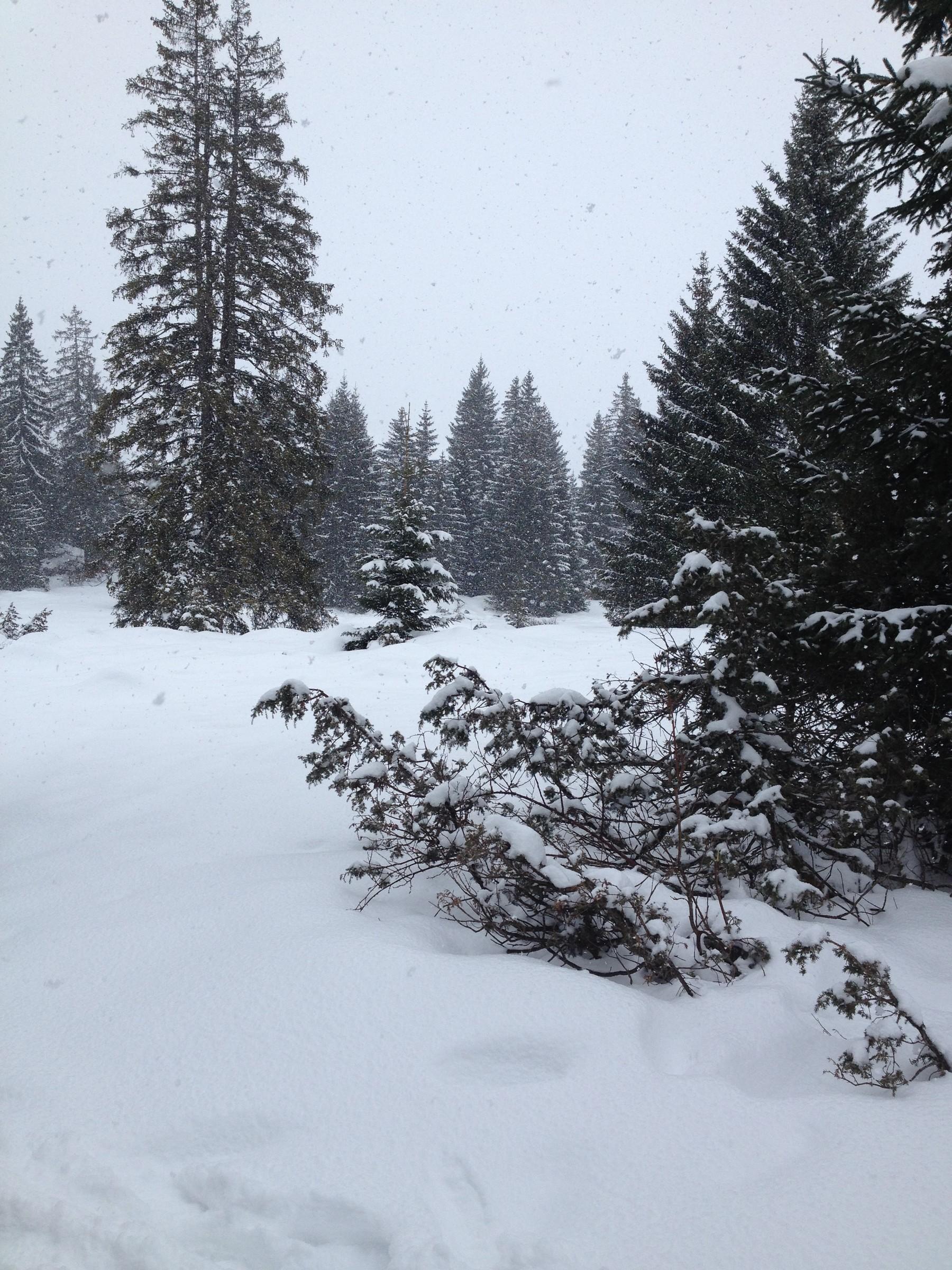 neige20