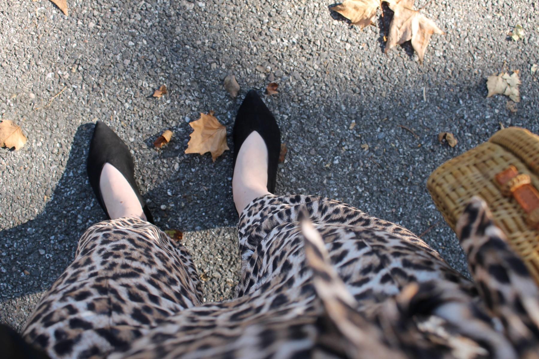 leopard16